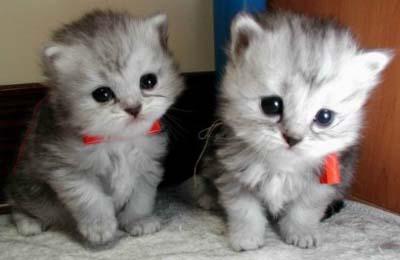 cat_cute2